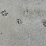 コールズガーデンハルブフラグ - 駐車場には犬の足跡が