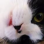 ラグドール - 人懐っこい猫ちゃんばっかり★