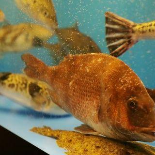 水揚げされたばかりの旬の鮮魚が自慢です!