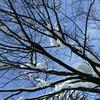 得月楼 - その他写真:季節イメージ(冬)