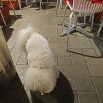 こんなもんじゃ - 小型犬用サイズ