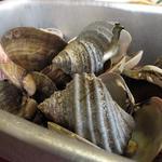 萩の茶屋 - 貝殻の残骸