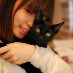 ラグドール - 黒猫はボンベイのトム君です。