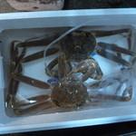 ととや一 - 松葉蟹