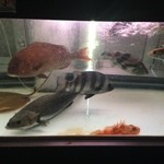 魚魚魚 - 店内には生簀があり見ても楽しめます♪