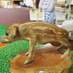 木の子茶屋 - かわいいイノシシの赤ちゃんの剥製が店内の入口にいました。