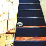 ディエチ - カフェへの階段。'13 11月下旬