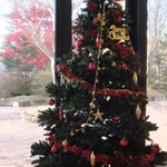 エルバージュ - 窓際にクリスマスツリー♪庭の木々は紅葉していました。