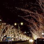 チャオバンブー - 表参道 イルミネーション2013♡11月28日スタート♡