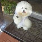パティスリー タダシ ヤナギ - あなたは入れませんよ〜!!