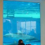 デルフィーノ - イルカが泳いでます!