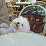 ブレッツカフェ クレープリー - アンジェリーナは犬のクッキー