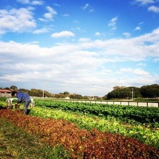 Le Salon de Legumes - 三浦半島から届く旬の地野菜達