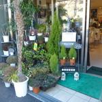 カフェ・ド・オーク - 店頭にある緑の鉢