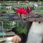 掛川花鳥園 - 鳥は餌付けされ人間に慣れてる
