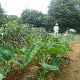 産地直送の新鮮野菜を使用