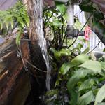 富士屋 - 綺麗な湧き水がどんどんと。