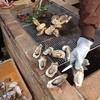 マザーロード - 料理写真:牡蠣食べ放題