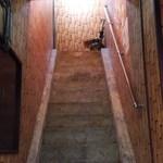 シギグラカフェ - 階段を上がれば店内