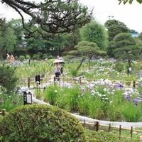 グランディール - 菖蒲祭りは6月1日から25日まで。美しい菖蒲を見に来てくださいね。