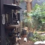 Raw cafe - 庭にいる猫の家族