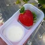 和田観光苺組合 - ミルク