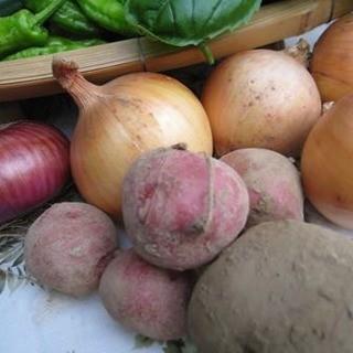 県産ヨーロッパ野菜等美味しい野菜を使用