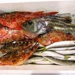 魚魚魚 - 本日の鮮魚