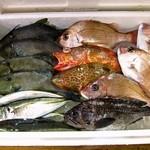 24489776 - 本日の鮮魚