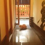 串焼き FUJI - たまに猫も来店していますww