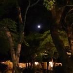バー 山猫 - 亀の井の満月