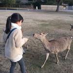 カフェ イ・ルンガ - おまけ2、鹿さんたち、だんだん大胆になってきて。。。