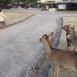 カフェ イ・ルンガ - おまけ3、鹿に囲まれビビって逃げる次女。(爆)