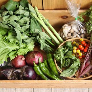 こだわりの新鮮野菜を使用したお料理をどうぞ♪