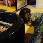 まったり家 - 看板犬のリッチー