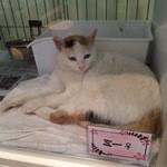猫見家 - ガラスのケースに入ってました。みーちゃん。