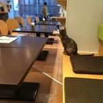 猫見家 - フローリングの店内。時々ねこちゃんが遊びに来ます。