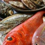やけぼっくい - 市場から直送の新鮮な魚貝類。珍しい魚も仕入れています。