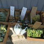 24922147 - 新鮮野菜が安いよ