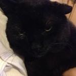 オリオンや - お料理、おいしかったです。店長さんの黒猫のしお君も可愛かった*\(^o^)/*