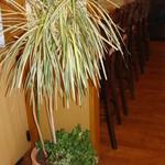 洋風めし屋 ラパンアジル - カウンター横 観葉植物
