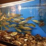 海鮮居酒屋 えん屋 - 店内の水槽の中には鮮魚が♪