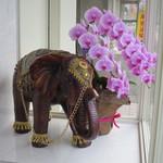 ドラゴンカレー - 象の置物