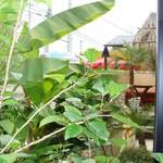 ラハイナ - 2009.6.30 撮影 店内 ① 窓辺の観葉植物