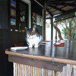 25566215 - お店の看板招き猫