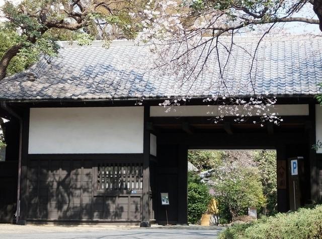 槐樹 - 八芳園の正門と桜