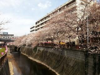 gooz 中目黒店 - 目黒川2014年 3月29日