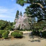 25656425 - ≪'14/03/29撮影≫快晴で満開のしだれ桜です