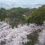 眺めのいいカフェ パ・ノ・ラ・マ - お店から見た春の景色