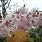 眺めのいいカフェ パ・ノ・ラ・マ - お店の隣の桜